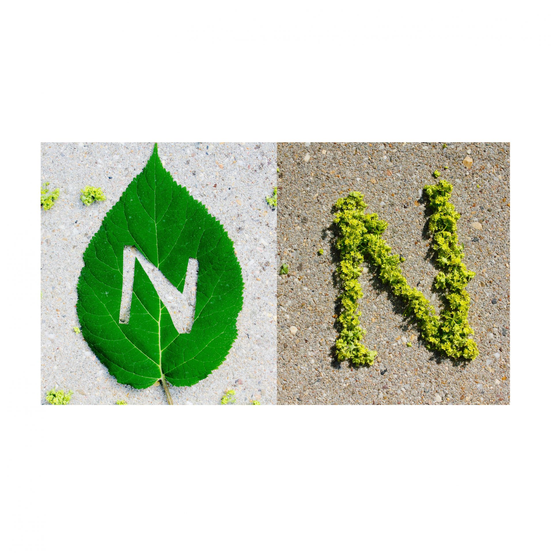 Nature Typography Experiment